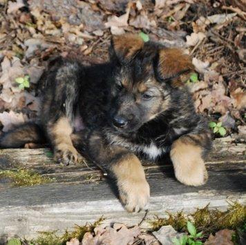 Розочка - Собаки в добрые руки