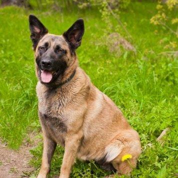 Ефросинья - Собаки в добрые руки