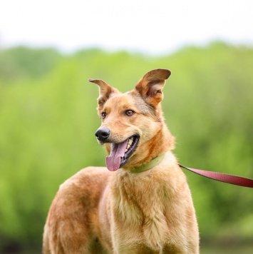 Диксон - Собаки в добрые руки