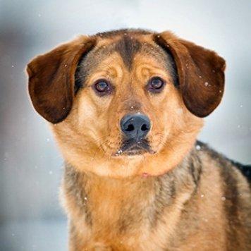 Джинджи - Собаки в добрые руки