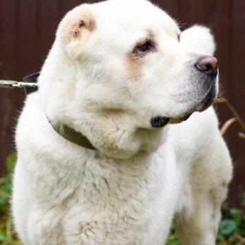 Габаш - Собаки в добрые руки