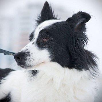 Дени - Собаки в добрые руки