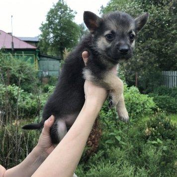 Малыш - Собаки в добрые руки