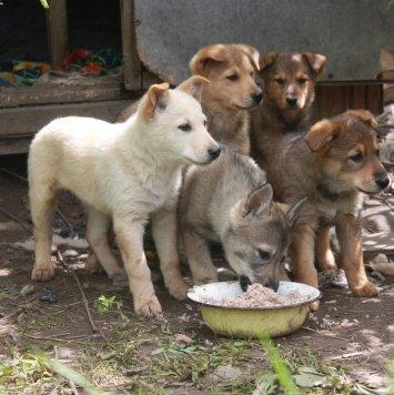 масик - Собаки в добрые руки