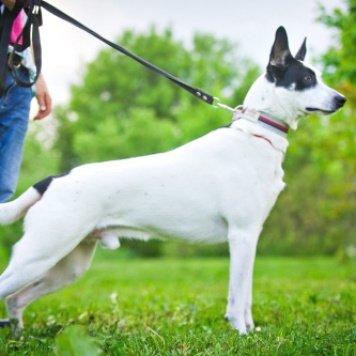 Батончик - Собаки в добрые руки