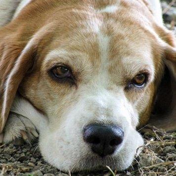 Находка - Найденные собаки