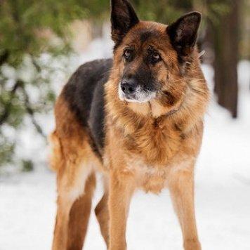 Теодора - Собаки в добрые руки