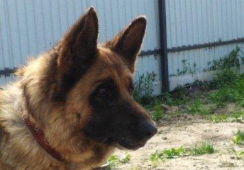 Хеллада - Собаки в добрые руки