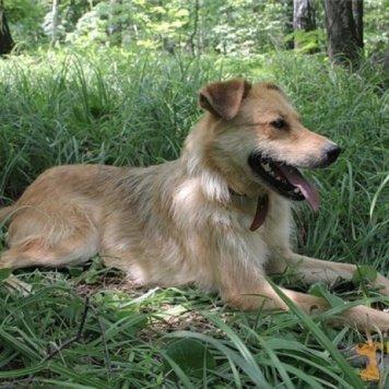 Лирой - Собаки в добрые руки
