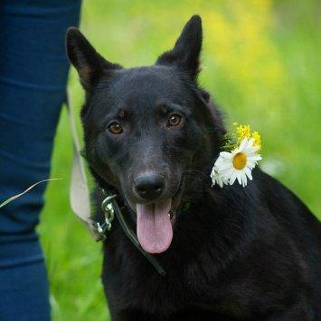 Урсула - Собаки в добрые руки