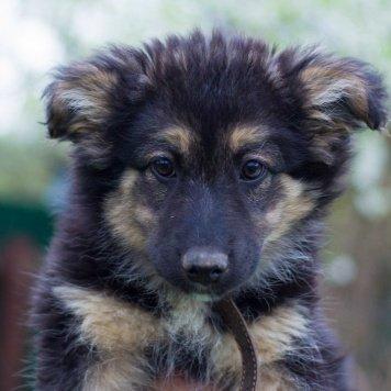 Лекса - Собаки в добрые руки