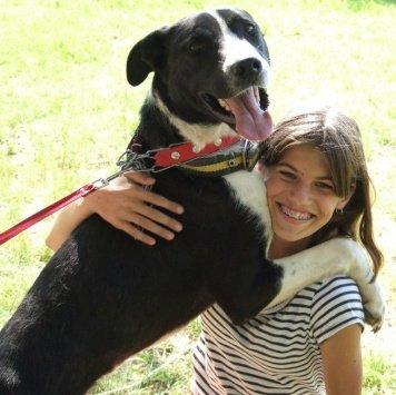 Бульчанский - Собаки в добрые руки