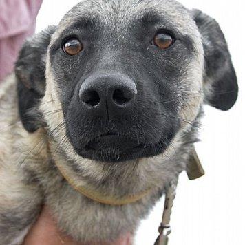 Таня - Собаки в добрые руки