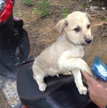 Глория и Макс - Собаки в добрые руки