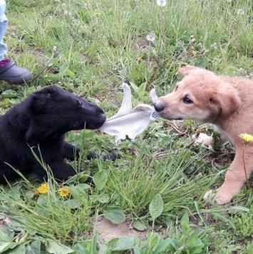 Черныш и Рыжуля - Собаки в добрые руки