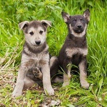 Карамельки - щенки - Собаки в добрые руки