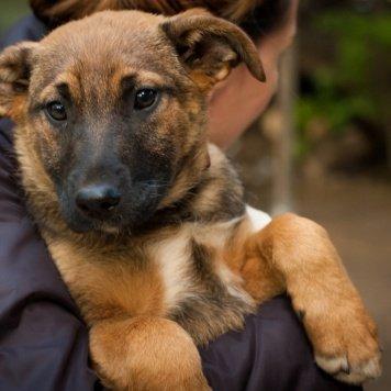 Лючия - рыжий щенок - Собаки в добрые руки