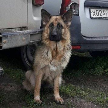 Соната - Собаки в добрые руки