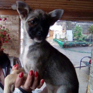 Лисма - Собаки в добрые руки