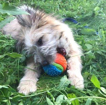 Лима - Собаки в добрые руки