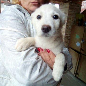 Липтон - Собаки в добрые руки