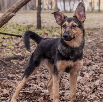 Боня-овчаренок - Собаки в добрые руки