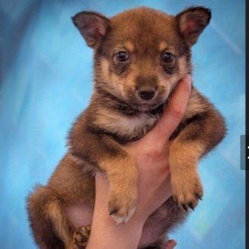 Малышка - Собаки в добрые руки