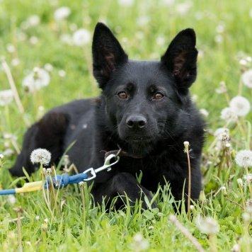 Бэрнадет - Собаки в добрые руки