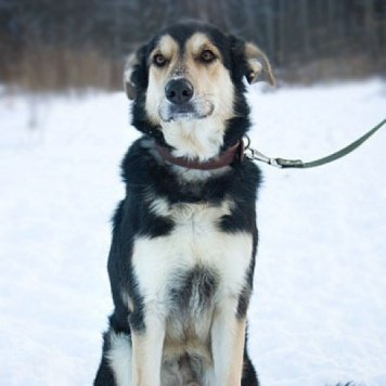 Ушан - Собаки в добрые руки