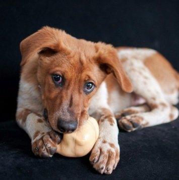 Руфус - Собаки в добрые руки