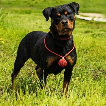 Лорина - Собаки в добрые руки