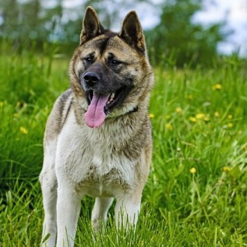 Маркиза - Собаки в добрые руки
