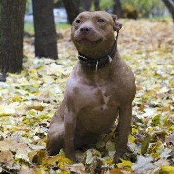 Андреа - Собаки в добрые руки
