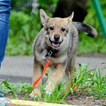 Лисена - Собаки в добрые руки