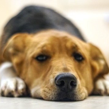 Веснушка - Собаки в добрые руки
