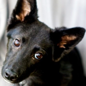 Фиби - Собаки в добрые руки