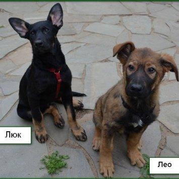 Люк иЛео - Собаки в добрые руки