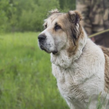 Фатима - Собаки в добрые руки