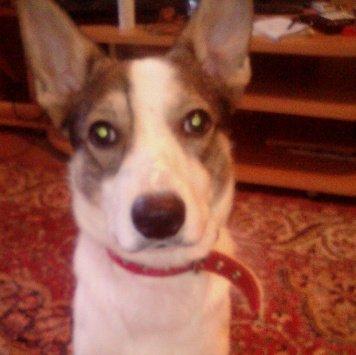 Хеппи - Собаки в добрые руки