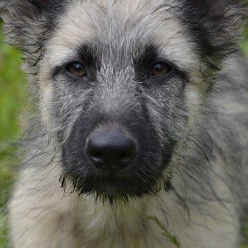 Мифодий - Собаки в добрые руки