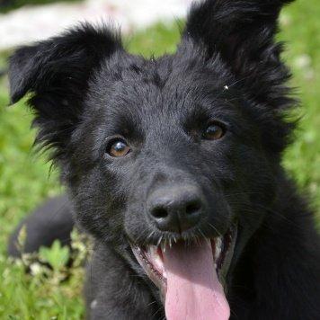 Балуша - Собаки в добрые руки