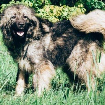Нира - Собаки в добрые руки