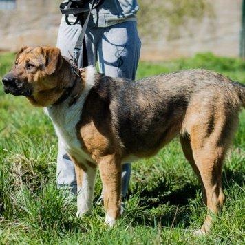 Гренка - Собаки в добрые руки