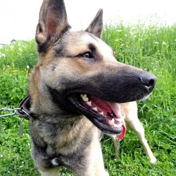 Кайрат - Собаки в добрые руки