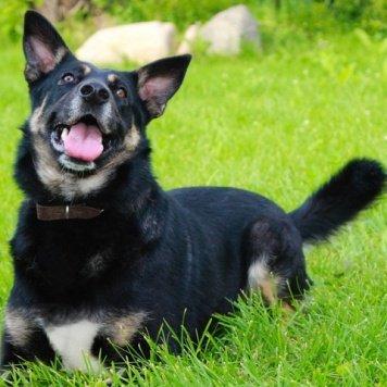 Ксюха - Собаки в добрые руки