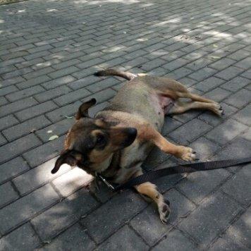 Букля - Собаки в добрые руки