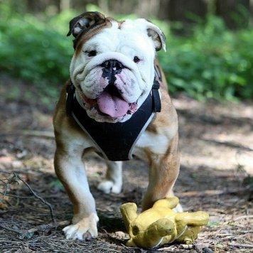 Викинг - Собаки в добрые руки