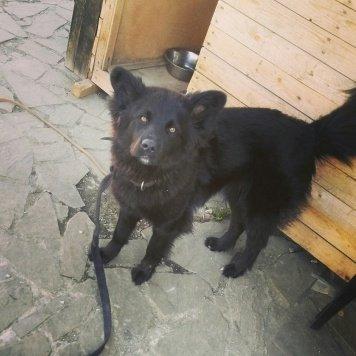 Боня - Собаки в добрые руки
