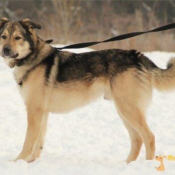 Стёпка - Собаки в добрые руки