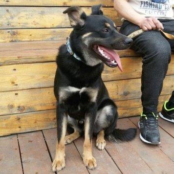 Бойко - Собаки в добрые руки